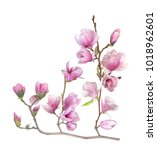 Small photo of magnolia flower branch isolated on white
