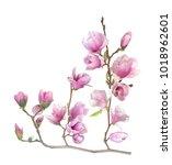 Magnolia Flower Branch Isolated White - Fine Art prints