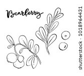 hand drawn painted set of... | Shutterstock . vector #1018964431