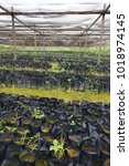 Small photo of View of a large traditionnal plants nursery in africa. Pattern of many black bags rows. Place shaded by a light cloth with small holes and held by wooden poles. Alignment of the different elements.