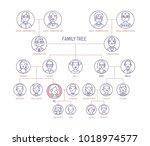 family tree  pedigree or... | Shutterstock .eps vector #1018974577
