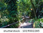 access through the jungle to... | Shutterstock . vector #1019002285