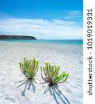 rapid bay  south australia   Shutterstock . vector #1019019331