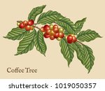 coffee tree elements  retro... | Shutterstock . vector #1019050357