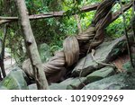 the giant vine  the gigantic... | Shutterstock . vector #1019092969