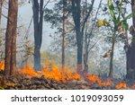 forest fire  wildfire burning... | Shutterstock . vector #1019093059