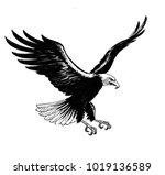 flying eagle. black and white... | Shutterstock . vector #1019136589
