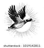 flying duck. black and white... | Shutterstock . vector #1019142811