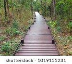 wooden walk way between mixed... | Shutterstock . vector #1019155231