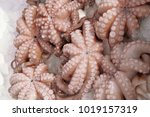 fresh octopus on market  | Shutterstock . vector #1019157319