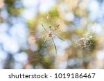 the spider web in the nature ... | Shutterstock . vector #1019186467