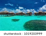 over water bungalows with steps ... | Shutterstock . vector #1019203999