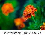 velvet ribbons in a summer... | Shutterstock . vector #1019205775