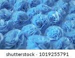handmade blue crepe paper roses ...   Shutterstock . vector #1019255791