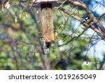 great tits on bird feeder on... | Shutterstock . vector #1019265049