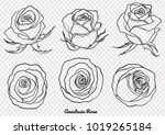rose vector set by hand drawing.... | Shutterstock .eps vector #1019265184