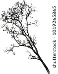 isolated tree on white... | Shutterstock . vector #1019265865