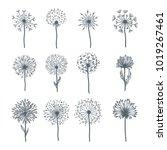 tender wild dandelion in all... | Shutterstock .eps vector #1019267461