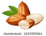 almond nuts whole and half... | Shutterstock .eps vector #1019290561