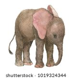 Stock photo little baby elephant watercolor illustration 1019324344