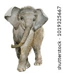 Stock photo little baby elephant watercolor illustration 1019325667