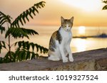cat  patched tabby and white... | Shutterstock . vector #1019327524
