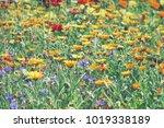 colorful flower glade. summer... | Shutterstock . vector #1019338189