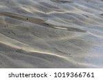 sea water sandy bottom... | Shutterstock . vector #1019366761