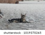 stray cat laying on sandy beach | Shutterstock . vector #1019370265