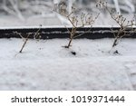snow in winter. cold weather.... | Shutterstock . vector #1019371444