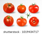 tomato set. red tomato... | Shutterstock .eps vector #1019434717