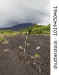 Small photo of Way to crater Marum through ash plains at Ambrym island volcanic caldera, Malampa province-Vanuatu.