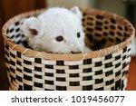 White Lion Cub In Basket...