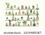 hand drawn different cactuses... | Shutterstock .eps vector #1019489287