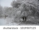 winter landscape with snow   Shutterstock . vector #1019507125