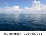 pacific ocean  queensland ... | Shutterstock . vector #1019507311