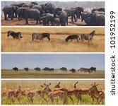 african safari in etosha namibia | Shutterstock . vector #101952199