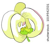 the is florida dogwood flower ... | Shutterstock .eps vector #1019542531