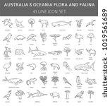 flat australia and oceania...   Shutterstock .eps vector #1019561689