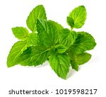 fresh peppermint isolated on... | Shutterstock . vector #1019598217