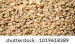 arabicas coffee bean raw at doi ... | Shutterstock . vector #1019618389