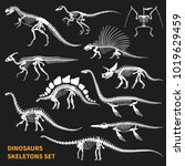 dinosaurs skeletons isolated... | Shutterstock .eps vector #1019629459
