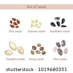 set of named seeds isolated on... | Shutterstock .eps vector #1019680351
