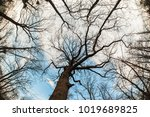 art  abstract and artistic... | Shutterstock . vector #1019689825