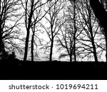 abstract nature in black and... | Shutterstock . vector #1019694211