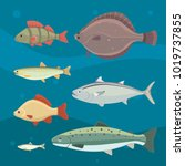isolated river fish. set of... | Shutterstock . vector #1019737855