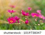 summer flowers in a field | Shutterstock . vector #1019738347