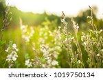 Bright Meadow Wild Beautiful...