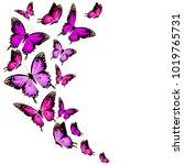 beautiful pink butterflies ... | Shutterstock .eps vector #1019765731