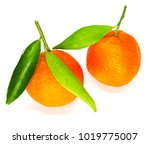 two oranges fruit isolated in... | Shutterstock . vector #1019775007